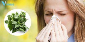 Chia sẻ các cách chữa viêm mũi dị ứng bằng lá cây