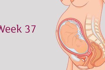 [ Thai 37 tuần ] : Là mấy tháng , chỉ số thai , bảng cân nặng